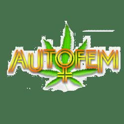 AutoFem