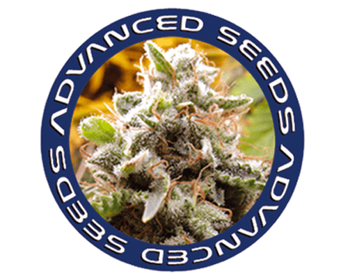 advanced-seeds