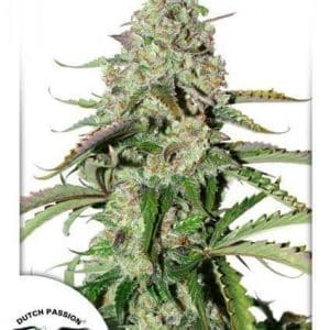 AutoColorado Cookies Dutch Passion 424x6001