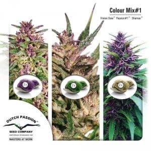 Colour Mix 1