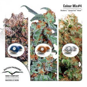 Colour Mix4 Dutch Passion1
