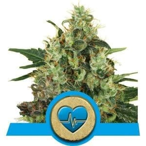 Medical Mass CBD