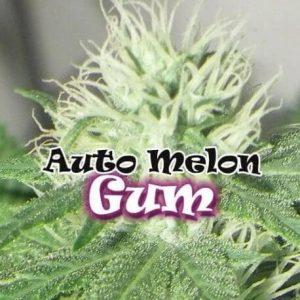 66-thickbox_default-auto-melon-gum[1]