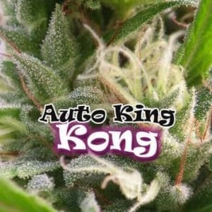 68-thickbox_default-auto-king-kong[1]
