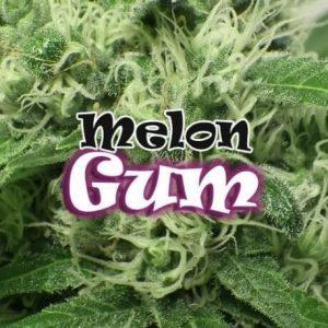 73-thickbox_default-melon-gum-2[1]