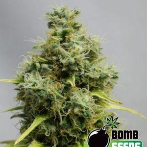 Big Bomb1