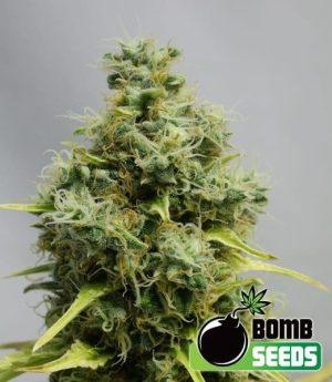 BIG BOMB Fem