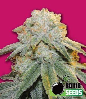 Bubble Bomb1