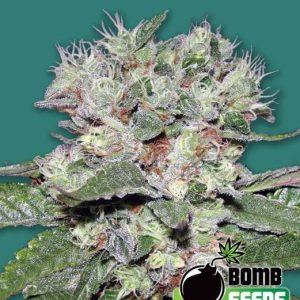 CBD-Bomb[1]