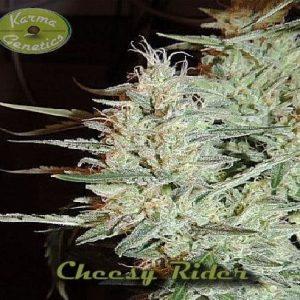 Cheesy-Rider[1]