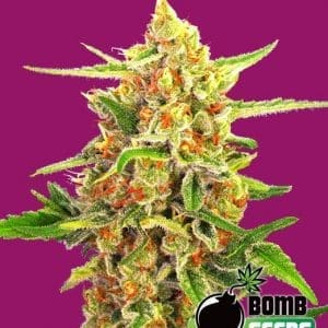 Cherry-Bomb[1]