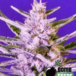 Ice Bomb1