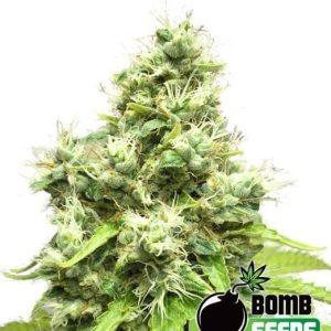 Medi-Bomb-1[1]