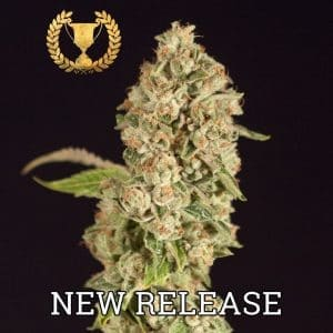 OG-Reekn-Feminized-by-The-Devils-Harvest-Seeds[1]