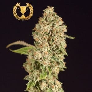 OG-Reekn-by-The-Devils-Harvest-Seeds[1]