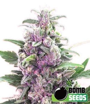 THC Bomb1