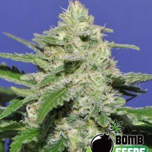 Widow Bomb1