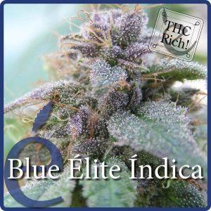 blue elite indica1