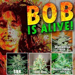 bob-promo[1]