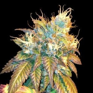dna genetics sour secret1