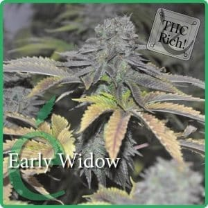 early-widow[1]