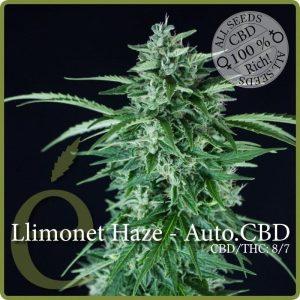 llimonet haze autofloreciente cbd1
