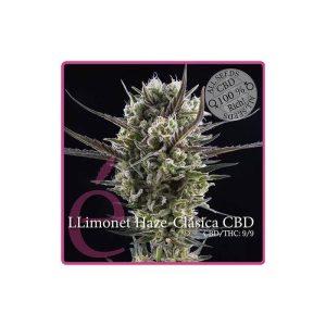 llimonet haze clasica cbd1