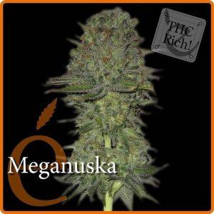meganuska1