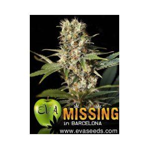 missing in barcelona1