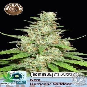 Kera Outdoor Hurricane