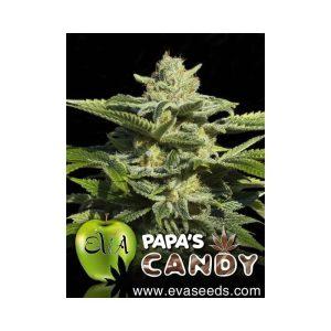 papas candy1