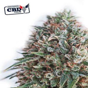 cbd 47 critical1