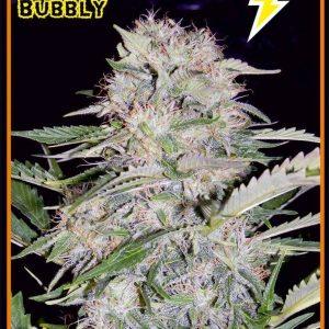 main-strain-sour-bubbly[1]