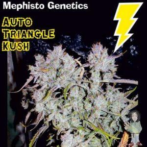 mephisto genetics auto triangle kush autoflowering feminised seeds 5001