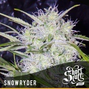 SNOWRYDER1 300x3001