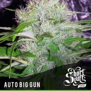 Short_Stuff_Boutique_Big_Gun-300x300[1]
