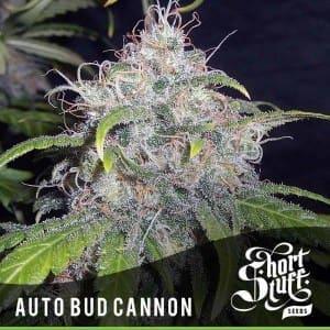 Short_Stuff_Boutique_Bud_Cannon-300x300[1]