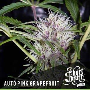 Short Stuff Boutique Pink Grapefruit 300x3001