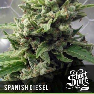 Short_Stuff_Boutique_Spanish_Diesel-300x300[1]