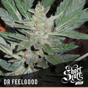 Dr. Feelgood Regular