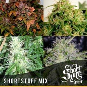 Short Stuff Dwarf Mix 300x3001
