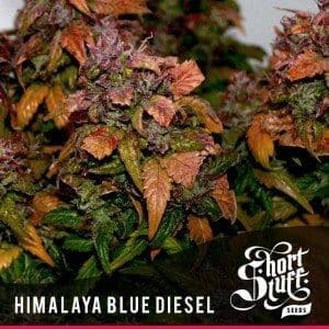 Short Stuff Next Gen Himalaya Blue Diesel 300x3001