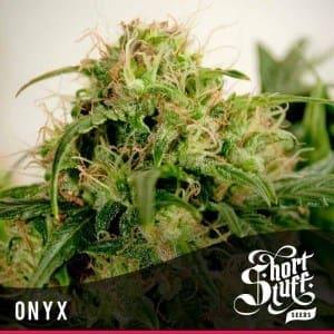 Short Stuff Next Gen Onyx 300x3001