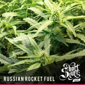Short Stuff Next Gen Russian Rocket Fuel 300x3001