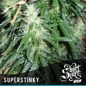 Super Stinky Auto