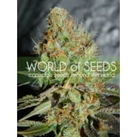 afghan_kush_special_3[1]