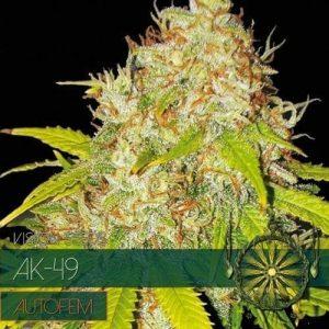 autofem-vision-seeds-ak-49-500x500-1-500x500[1]