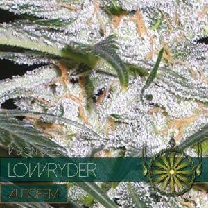 autofem-vision-seeds-lowryder-500x500-1-500x500[1]