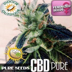 cbd pure201m1