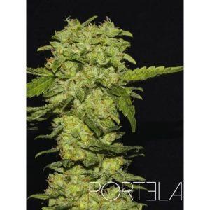 portela r kiem seeds1